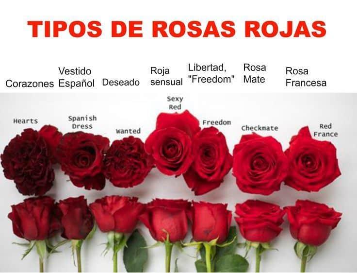 Tipos de rosas rojas variadas