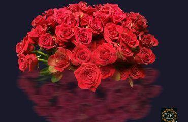 tipos de rosas rojas mundo