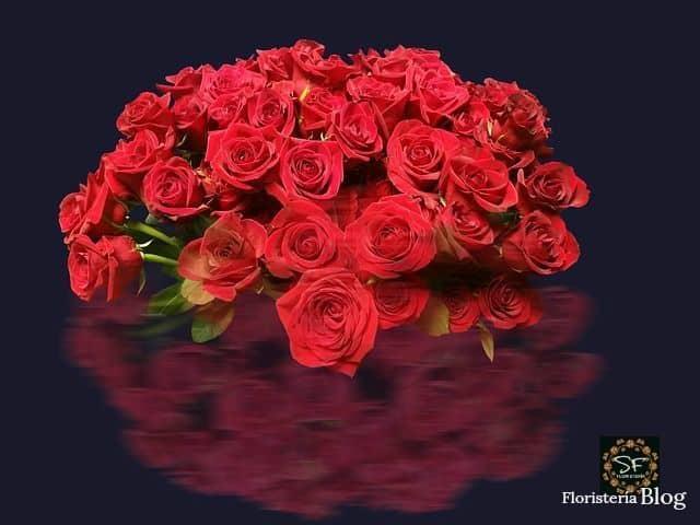 Tipos De Rosas Rojas En El Mundo Serviflor Funeral