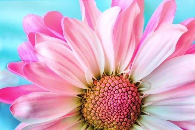 Flores bonitas y hermosas para un funeral