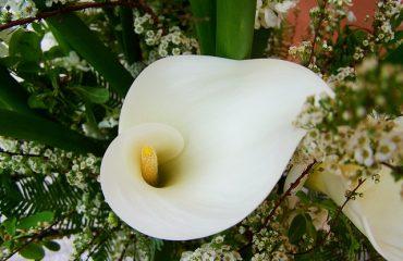 cala blanca principal