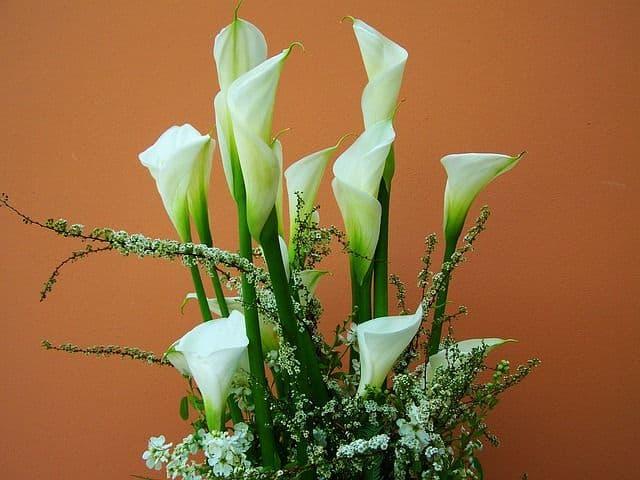 cala flor detalle floral