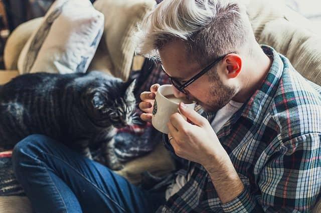 enterrarte con tu mascota gato