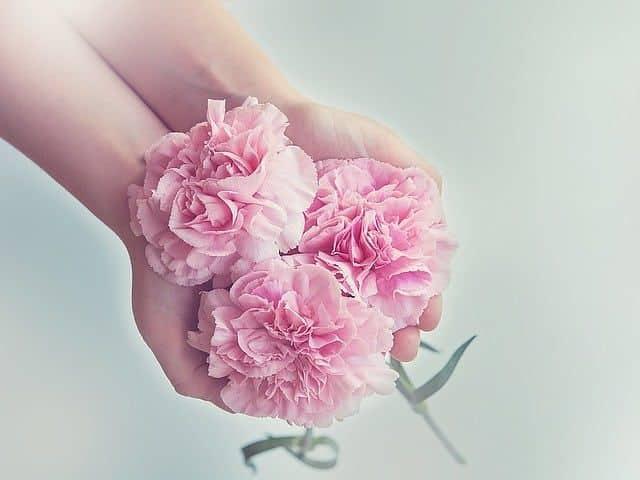 claveles hormas flores
